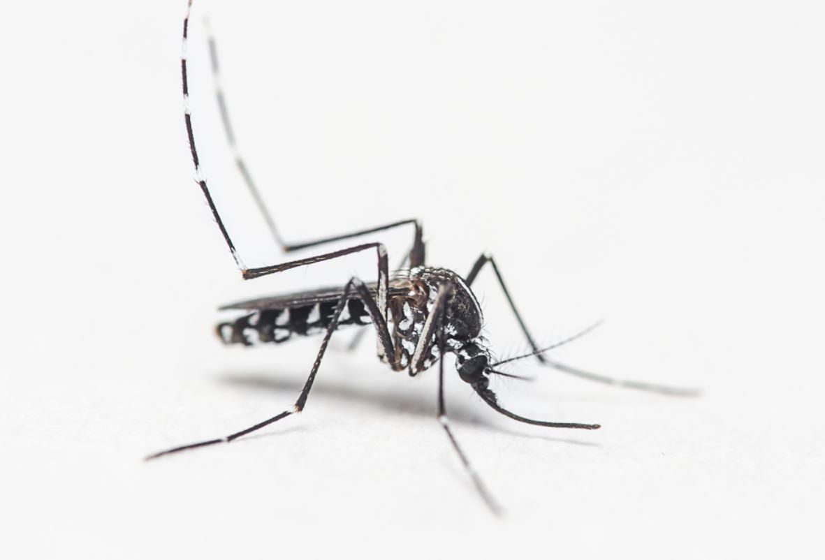 Les moustiques sont attirés par les odeurs mais aussi par les couleurs sombres, la chaleur et le CO2 que dégagent leurs cibles.
